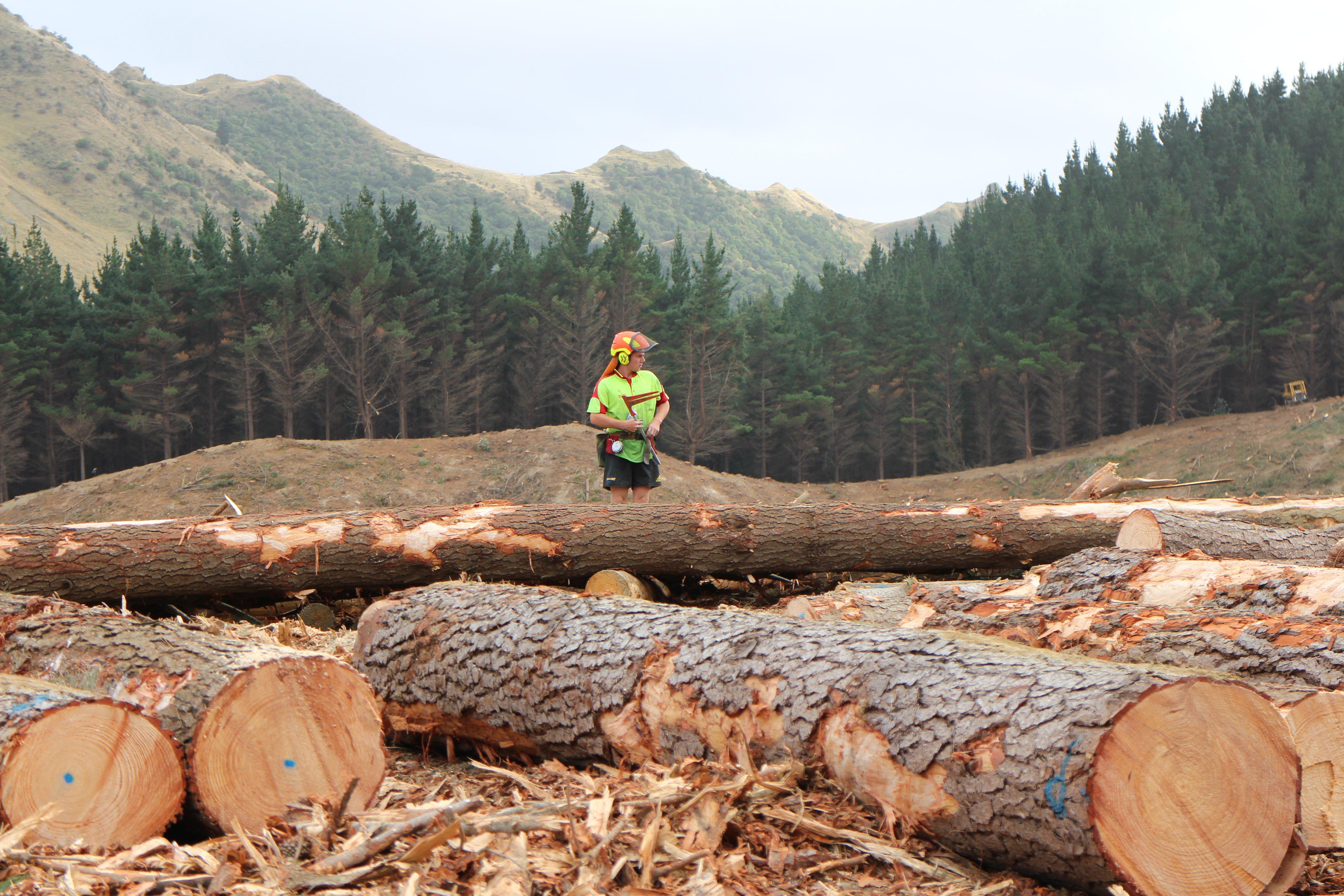 Log making at Brolly Logging