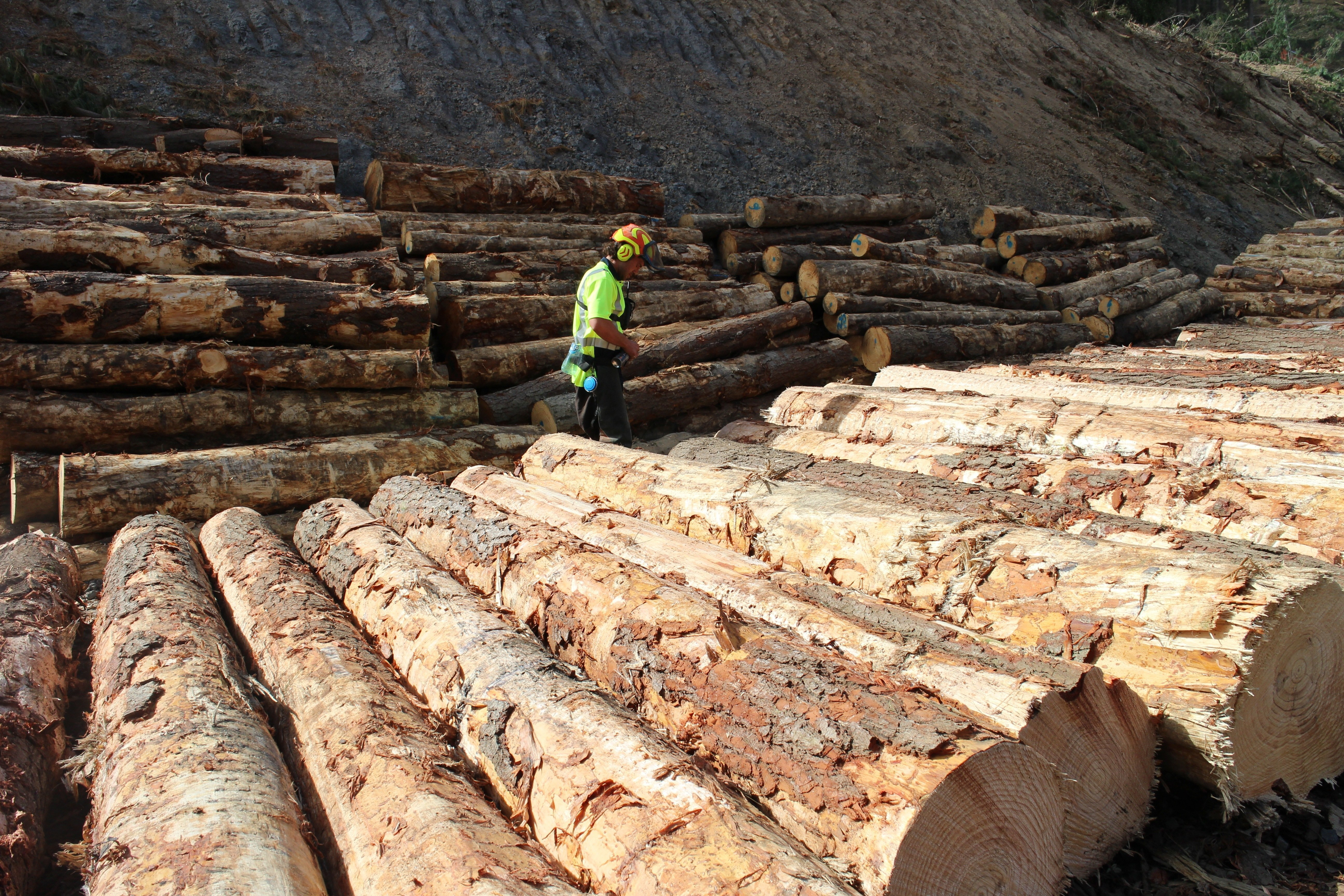 Logs from a commercial forest